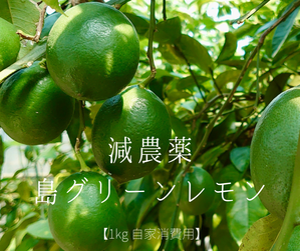 【農薬を減らして栽培】島グリーンレモン1キロ分(自家消費用):酸味がきつくなく使いやすいレモン