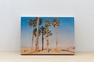 Wood Panel California #8 _ B5