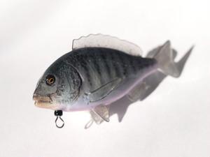 ホールフィッシュストラップ(黒鯛)