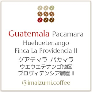 【送料込】グアテマラ パカマラ ウエウエテナンゴ地区 プロヴィデンシア農園II - Guatemala Pacamara Huehuetenango Finca La Providencia II - 300g(100g×3)