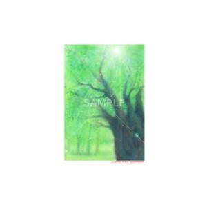【選べるポストカード3枚セット】No.151 木漏れ日の森