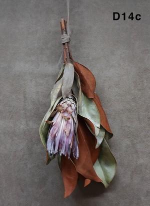 PHD 『Type D』 -Jasmine Jordan- (Magnolia)
