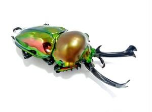 ニジイロクワガタ 幼虫3匹セット