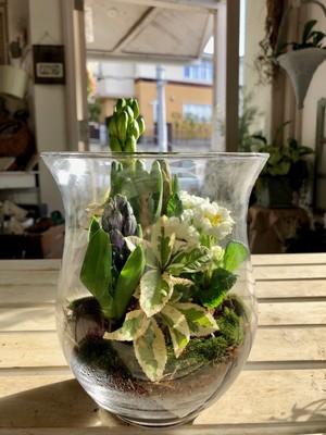 春を告げるガラス鉢