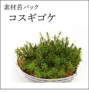 コスギゴケ 苔テラリウム作製用素材苔