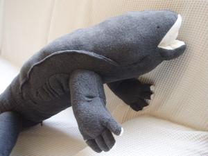 オオサンショウウオ Japanese giant salamander