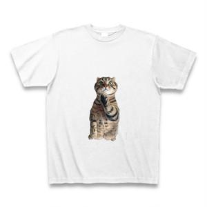 ティノ Tシャツ