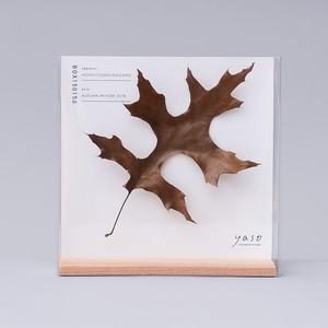 1130_ピンオークの葉