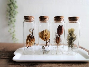 【現品限り】【送料無料】植物標本 Botanical Collection■Mサイズボトル ロング■4本セット