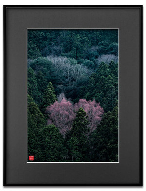 桂赤く染まる(ブラックボード)A3サイズ