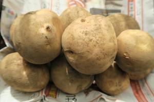 無肥料・無農薬栽培!ホクホクじゃがいも2kg