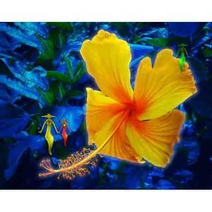 沖縄に咲く花・16・ハイビスカス