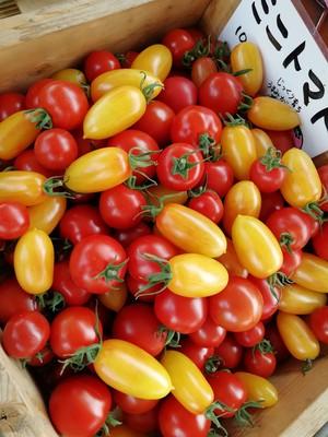 ミニトマト1Kg 赤黄色 ミックス『農薬化学肥料不使用』廣田農園