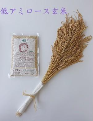 【500g】有機低アミロース玄米