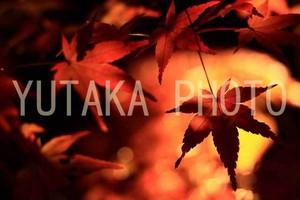 写真(紅葉)
