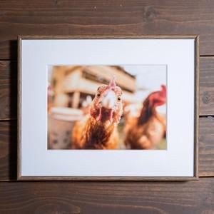 Photo Frame A4(鶏)