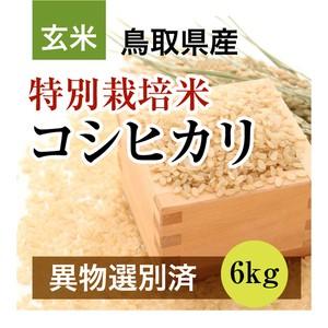 R2年産 特別栽培米コシヒカリ 6kg 玄米(鳥取県産)