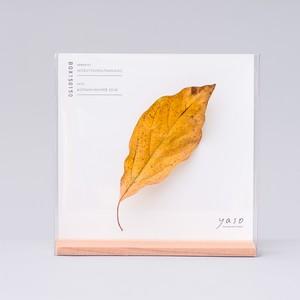 1132_クロモジの葉
