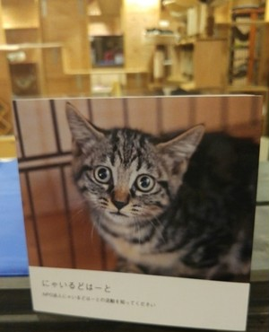 保護猫たちのフォトブック