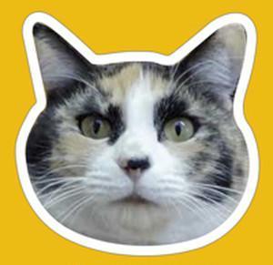 猫マグネット【マツコ】 Face Magnet [Matsuko]