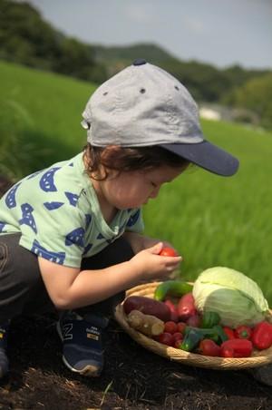 有機野菜セット(5品目)(冷蔵)