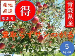 青森県津軽産りんご【葉とらずサンつがる】訳あり 5Kg/箱【収穫&発送時期 9月15日~9月30日】