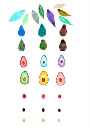 ポストカード「 avocado 」