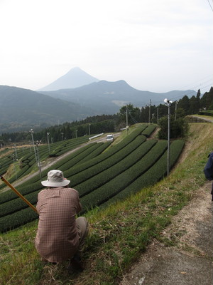 Walking Mount KAIMON DAKE Green Teayard Route KAGOSHIMA KYUSYU 3day