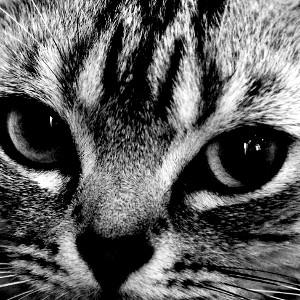 cat-01 | 猫 鳴き声 効果音/環境音