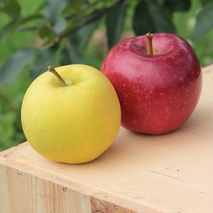メルシー・恋空セット 大箱 ご自宅用 | 夏リンゴどちらも楽しめます