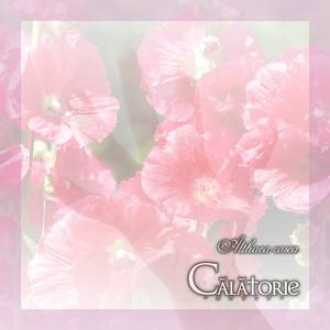 14th Digital Single「Althaea rosea」