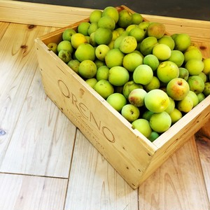【予約販売】無農薬栽培 梅 4kg単位