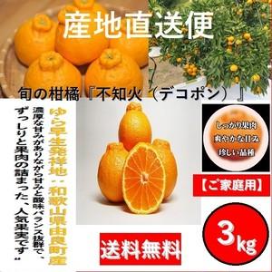 【早期予約販売】和歌山県由良町産 柑橘 不知火【しらぬい】【ご家庭用】3kg /箱【送料無料】