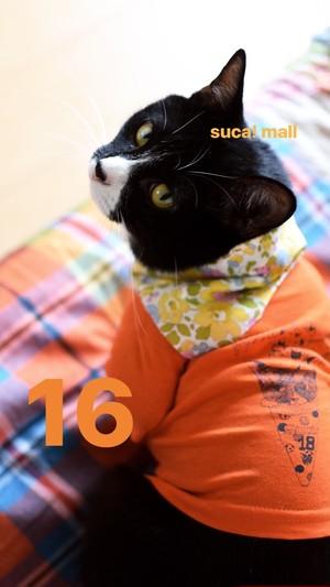 """16*スカとお揃いTシャツ♪(7)""""18ice"""""""