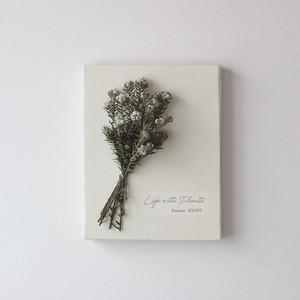 """植物キャンバス """"フィリカ・コットンブッシュ""""【bdfa19023】ドライフラワー"""
