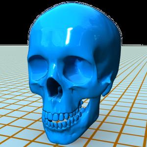 人体3Dデータ 頭部 頭蓋骨