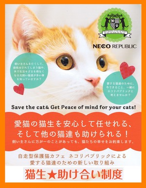猫生★助け合い制度『一般猫』年払い(4年目~)