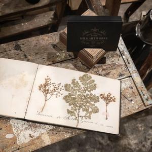 植物標本ミニアルバム フランスアンティーク