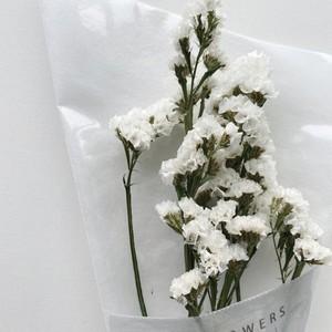 【花単種】スターチス シュニアータ