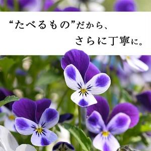 【87farm】食べられる押し花 10枚(ビオラ ヘブンリーブルー)