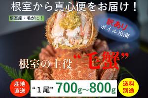 北海道根室産【堅蟹】【訳あり品】活ボイル冷凍毛ガニ【総重量700g〜800g/尾】数量限定販売