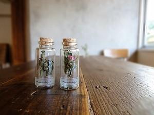 植物標本 Botanical Collection■No.33 ベルガモット(モナルダ)