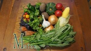 【毎週届く定期便】GLTの野菜詰め合わせセットM