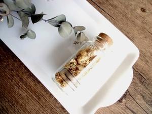 植物標本 Botanical Collection■No.26-B カモミールローマン