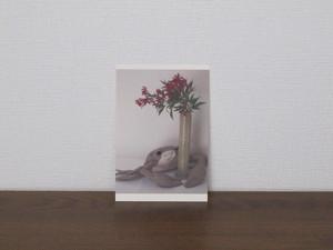 絵葉書 postcard