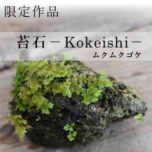 【現物販売】着生苔石ムクムクゴケ 11.3#6◆栽培容器付