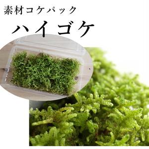 ハイゴケ 苔テラリウム・苔玉作製用素材苔