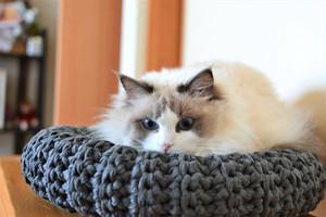 猫用ラウンドベッド Sサイズ/ minas