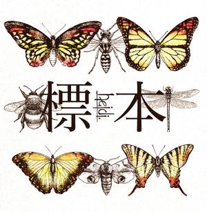 【heidi.】CD「標本」 Type-B