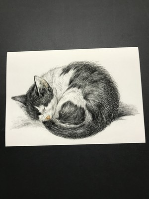 Rolled up lying sleeping cat by Jean Bernard  レプリカ